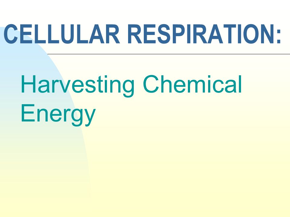 CELLULAR RESPIRATION: Harvesting Chemical Energy