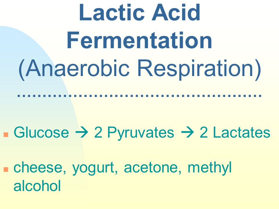 Lactic Acid Fermentation (Anaerobic Respiration) ………………………………………… n Glucose 2 Pyruvates 2 Lactates n cheese, yogurt, acetone, methyl alcohol