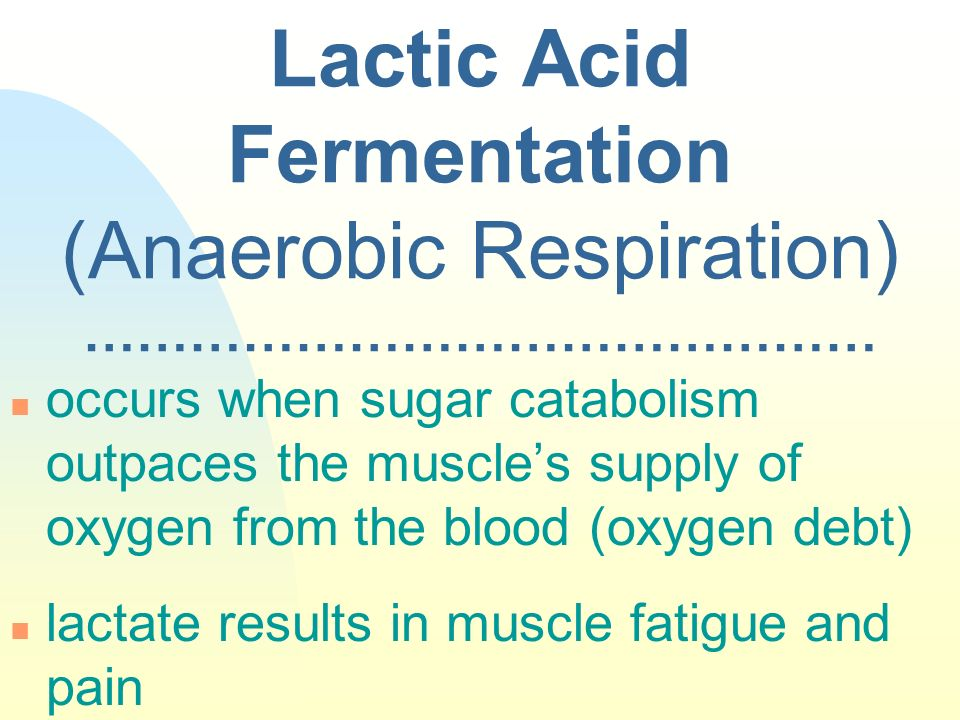 Lactic Acid Fermentation (Anaerobic Respiration) ……………………………………… n occurs when sugar catabolism outpaces the muscles supply of oxygen from the blood (