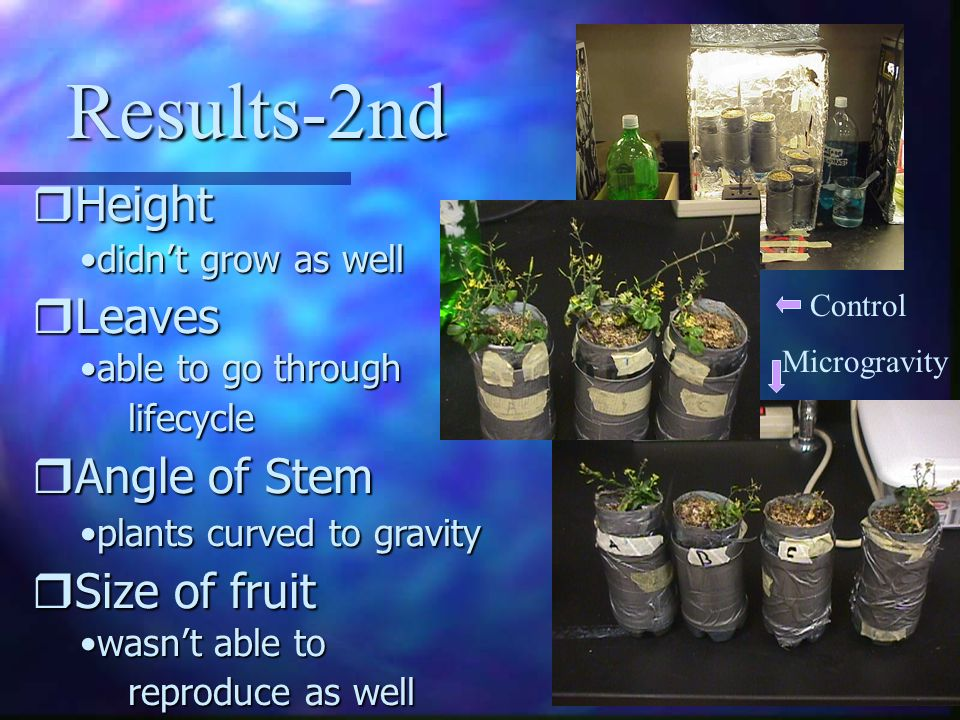 Results-2nd rHeight didnt grow as welldidnt grow as well rLeaves able to go through lifecycleable to go through lifecycle rAngle of Stem plants curved