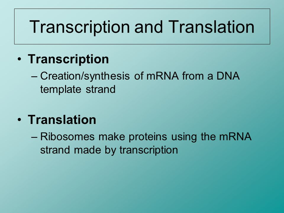 Translation Steps Termination 7.The process continues until the ribosome reaches a stop codon