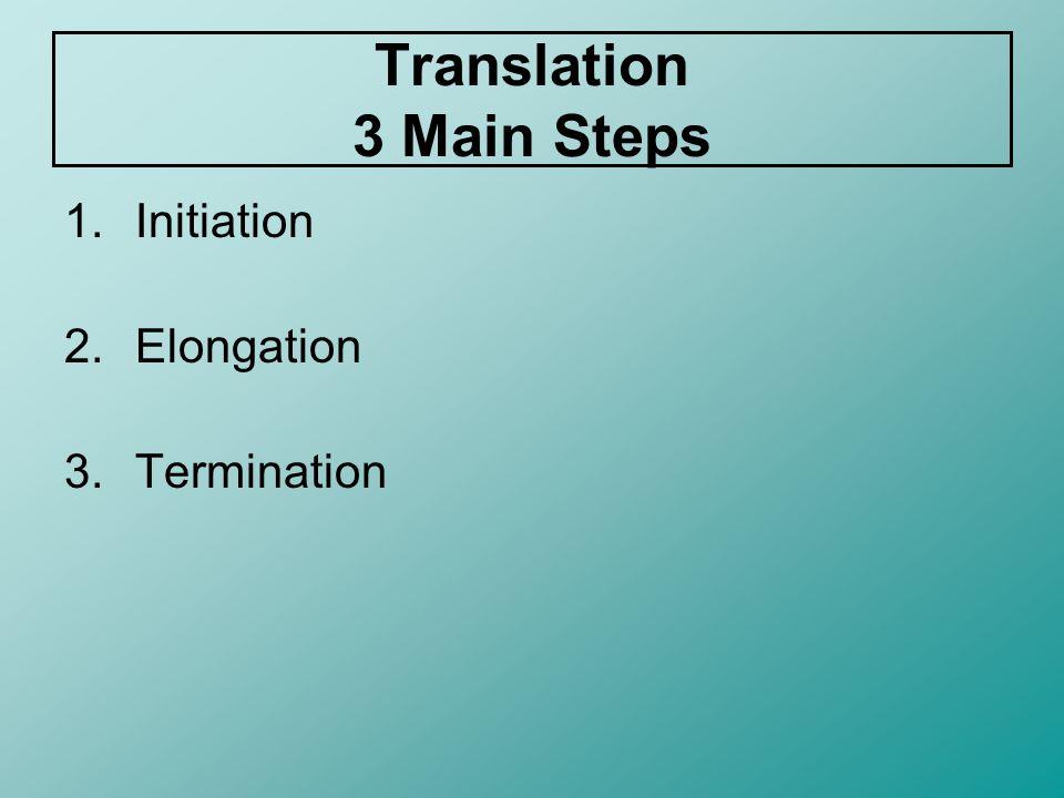 Translation Steps Initiation 1.Ribosomes attach to an mRNA strand