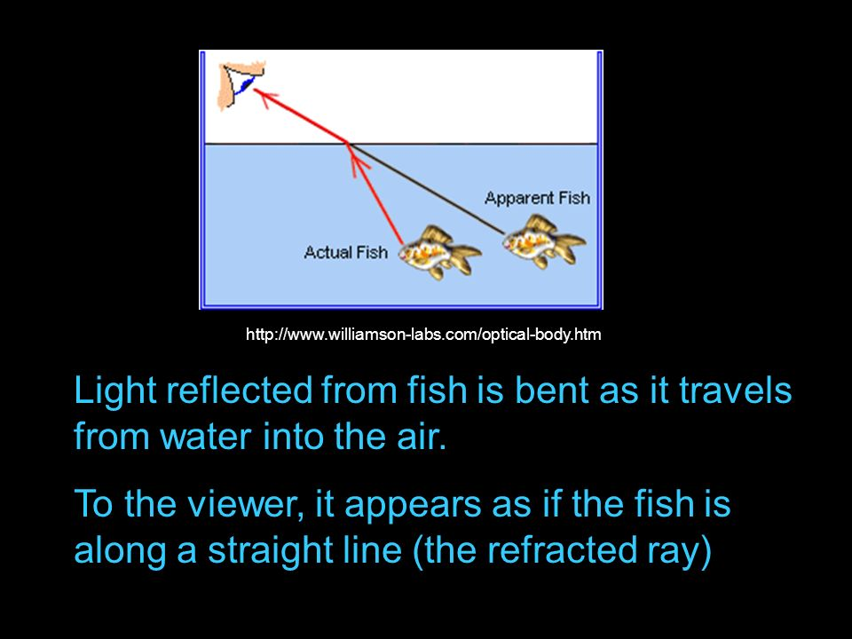 Light reflected from fish is bent as it travels from water into the air. To the viewer, it appears as if the fish is along a straight line (the refrac
