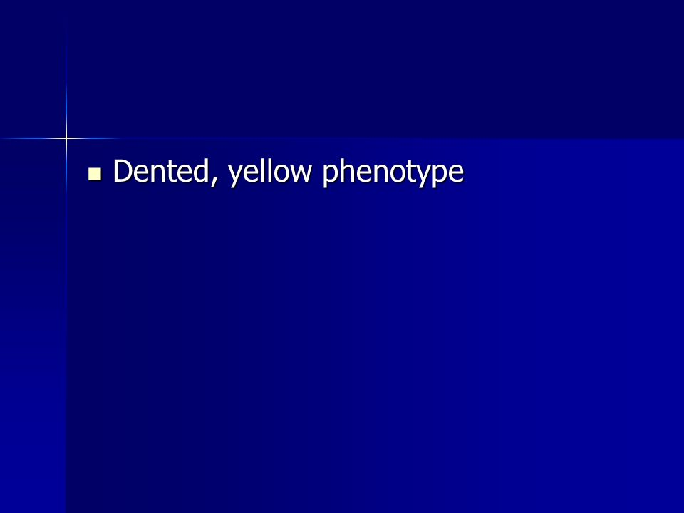 Dented, yellow phenotype Dented, yellow phenotype