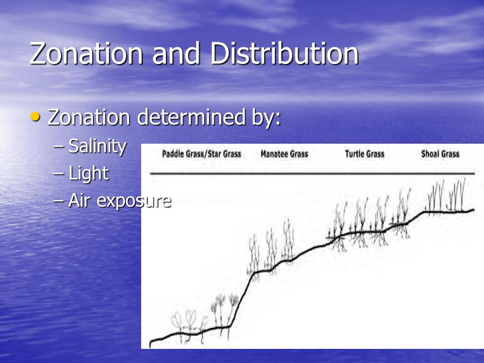 Zonation and Distribution Zonation determined by: Zonation determined by: –Salinity –Light –Air exposure