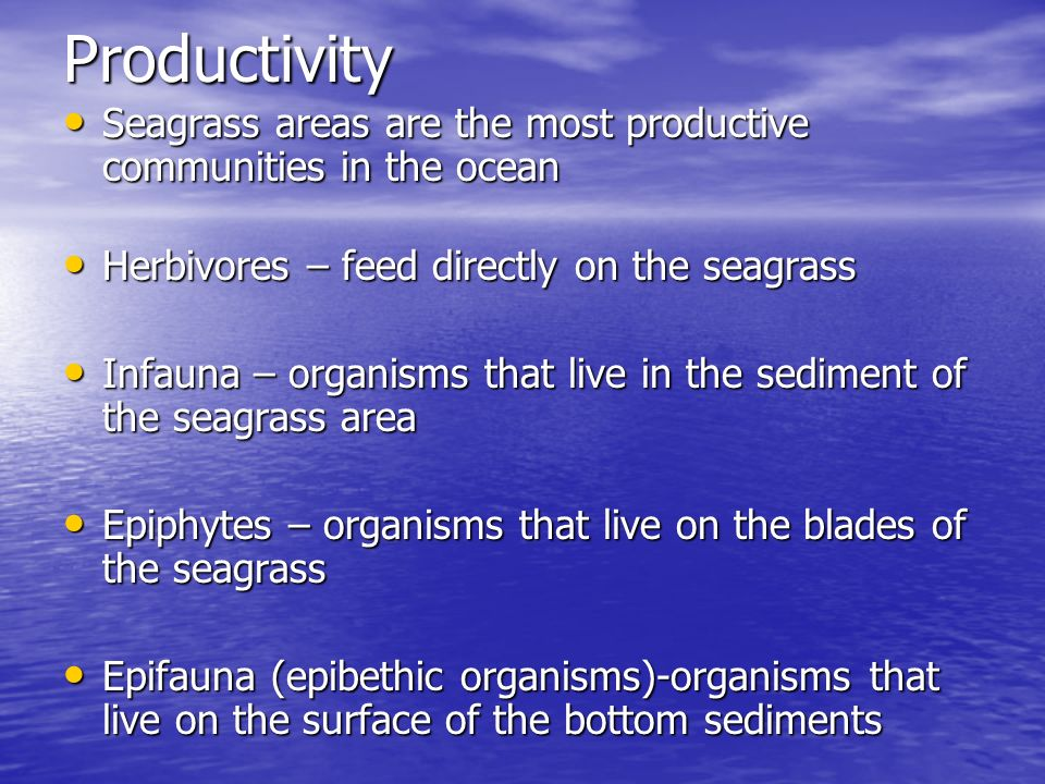 Productivity Seagrass areas are the most productive communities in the ocean Seagrass areas are the most productive communities in the ocean Herbivore