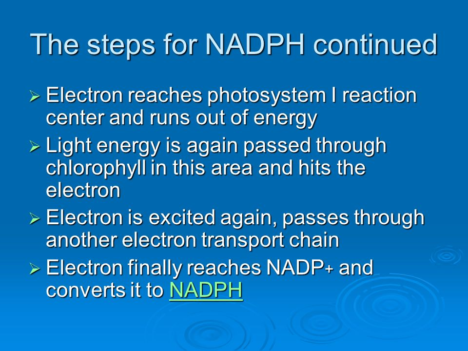 The steps for NADPH continued Electron reaches photosystem I reaction center and runs out of energy Electron reaches photosystem I reaction center and runs out of energy Light energy is again passed through chlorophyll in this area and hits the electron Light energy is again passed through chlorophyll in this area and hits the electron Electron is excited again, passes through another electron transport chain Electron is excited again, passes through another electron transport chain Electron finally reaches NADP + and converts it to NADPH Electron finally reaches NADP + and converts it to NADPHNADPH