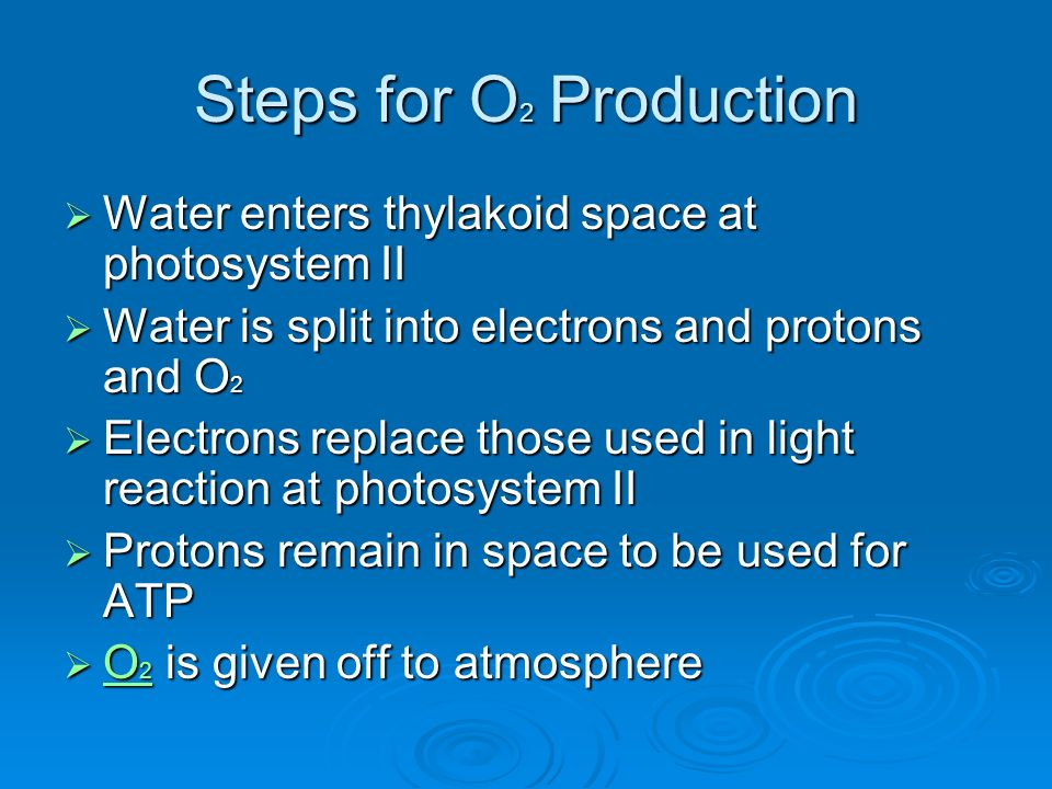 Steps for O 2 Production Water enters thylakoid space at photosystem II Water enters thylakoid space at photosystem II Water is split into electrons and protons and O 2 Water is split into electrons and protons and O 2 Electrons replace those used in light reaction at photosystem II Electrons replace those used in light reaction at photosystem II Protons remain in space to be used for ATP Protons remain in space to be used for ATP O 2 is given off to atmosphere O 2 is given off to atmosphere O 2 O 2