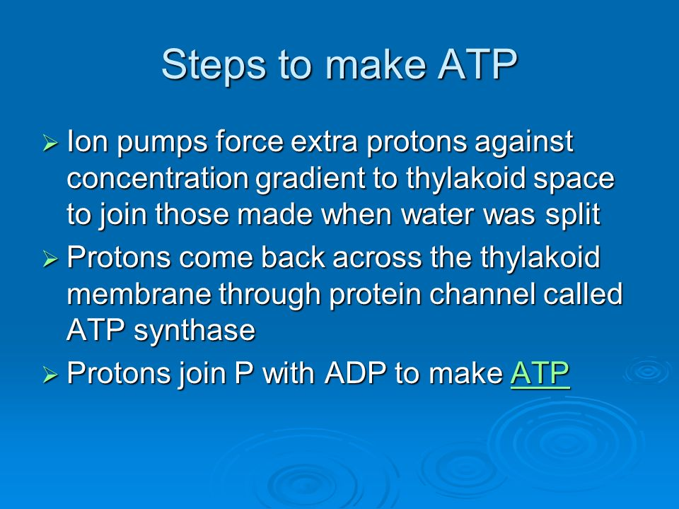 Steps to make ATP Ion pumps force extra protons against concentration gradient to thylakoid space to join those made when water was split Ion pumps force extra protons against concentration gradient to thylakoid space to join those made when water was split Protons come back across the thylakoid membrane through protein channel called ATP synthase Protons come back across the thylakoid membrane through protein channel called ATP synthase Protons join P with ADP to make ATP Protons join P with ADP to make ATPATP