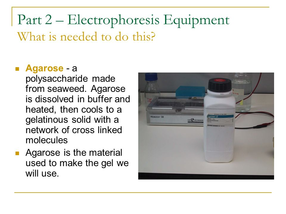Part 2 – Electrophoresis Equipment What is needed to do this? Agarose - a polysaccharide made from seaweed. Agarose is dissolved in buffer and heated,