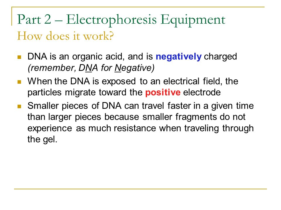 Part 2 – Electrophoresis Equipment How does it work? DNA is an organic acid, and is negatively charged (remember, DNA for Negative) When the DNA is ex