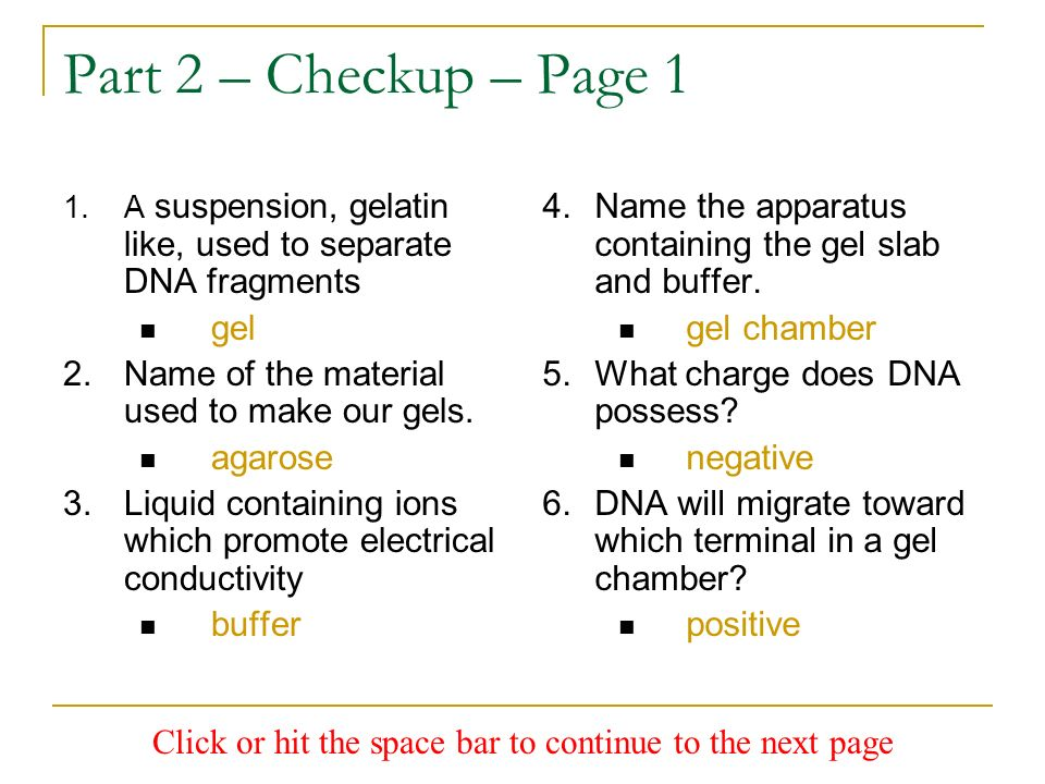 Part 2 – Checkup – Page 1 1.A suspension, gelatin like, used to separate DNA fragments gel 2.Name of the material used to make our gels. agarose 3.Liq