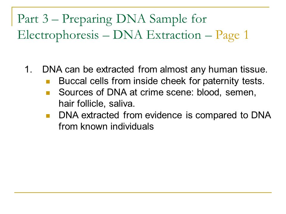 Part 3 – Preparing DNA Sample for Electrophoresis – DNA Extraction – Page 1 1.DNA can be extracted from almost any human tissue. Buccal cells from ins