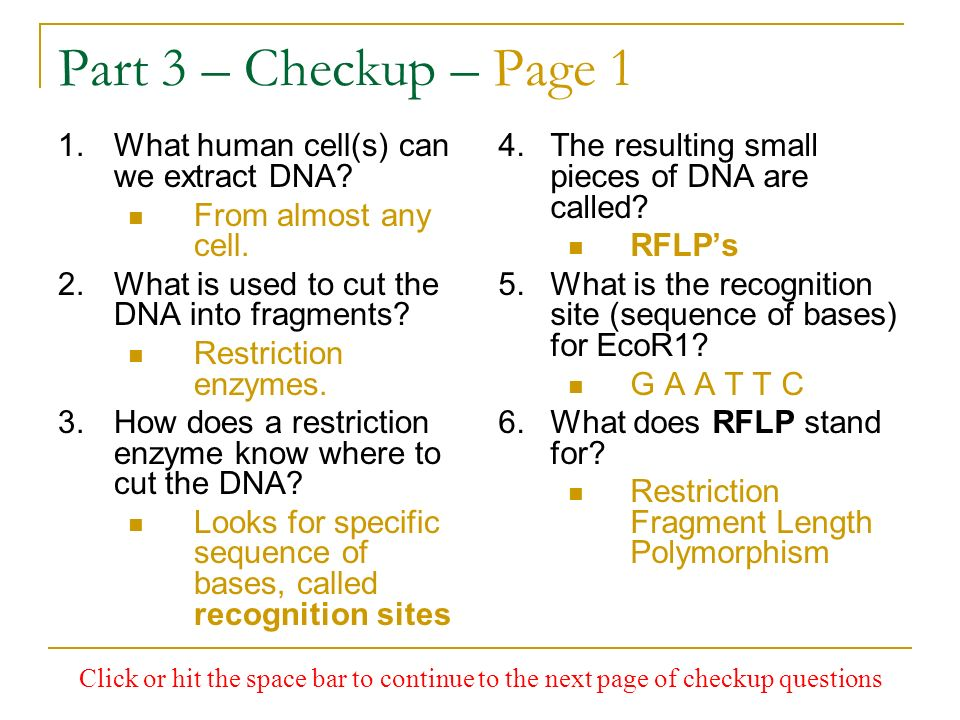 Part 3 – Checkup – Page 1 1.What human cell(s) can we extract DNA? From almost any cell. 2.What is used to cut the DNA into fragments? Restriction enz
