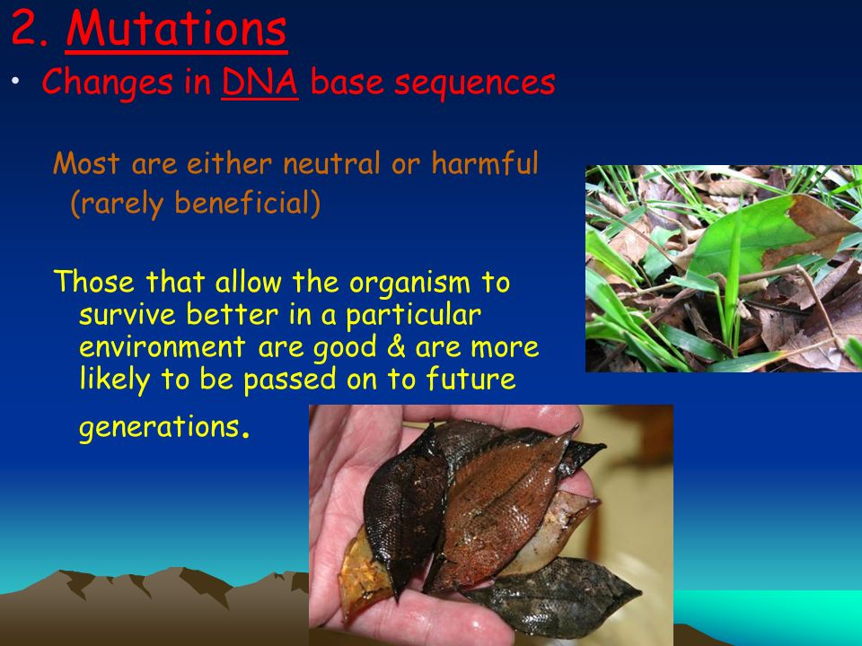 2. Mutations Changes in DNA base sequences Most are either neutral or harmful (rarely beneficial) Those that allow the organism to survive better in a