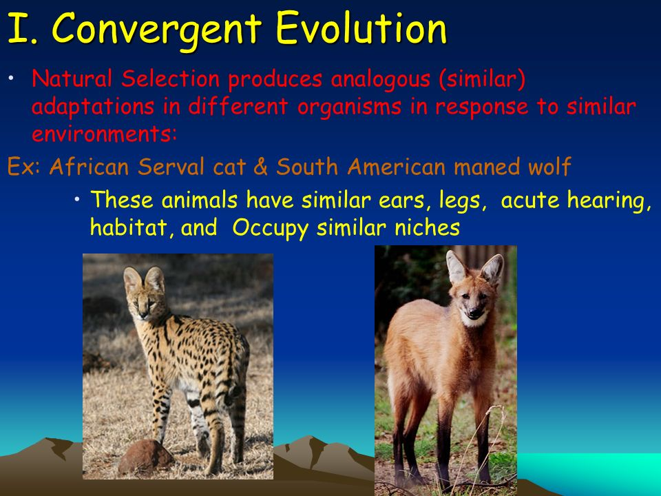 I. Convergent Evolution Natural Selection produces analogous (similar) adaptations in different organisms in response to similar environments: Ex: Afr