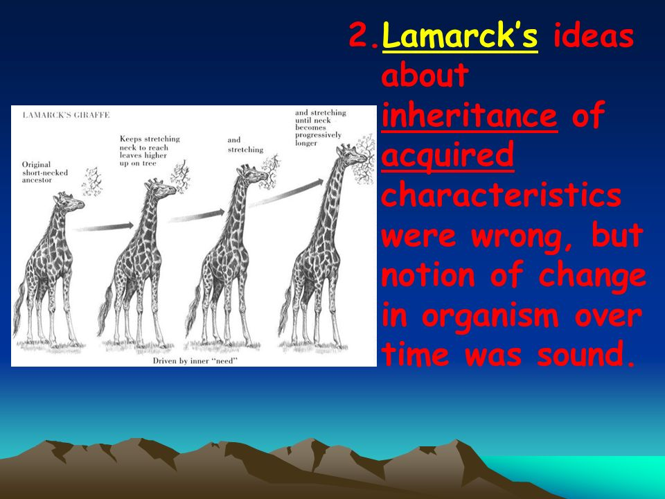 2.Lamarcks ideas about inheritance of acquired characteristics were wrong, but notion of change in organism over time was sound.