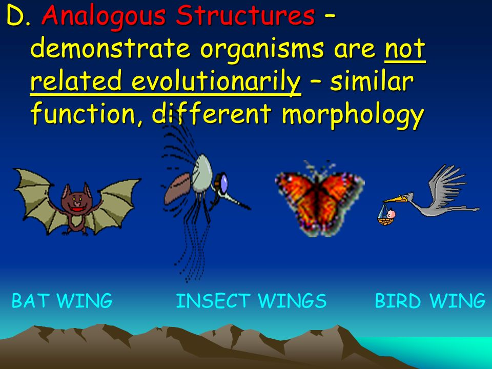 D. Analogous Structures – demonstrate organisms are not related evolutionarily – similar function, different morphology BAT WING INSECT WINGS BIRD WIN