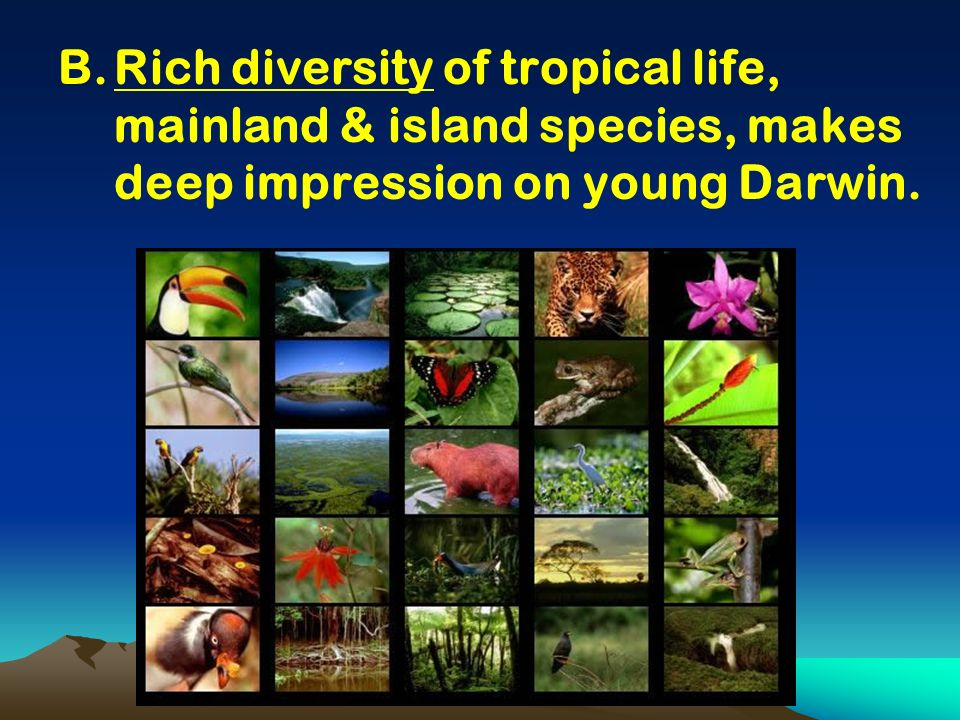 B.Rich diversity of tropical life, mainland & island species, makes deep impression on young Darwin.