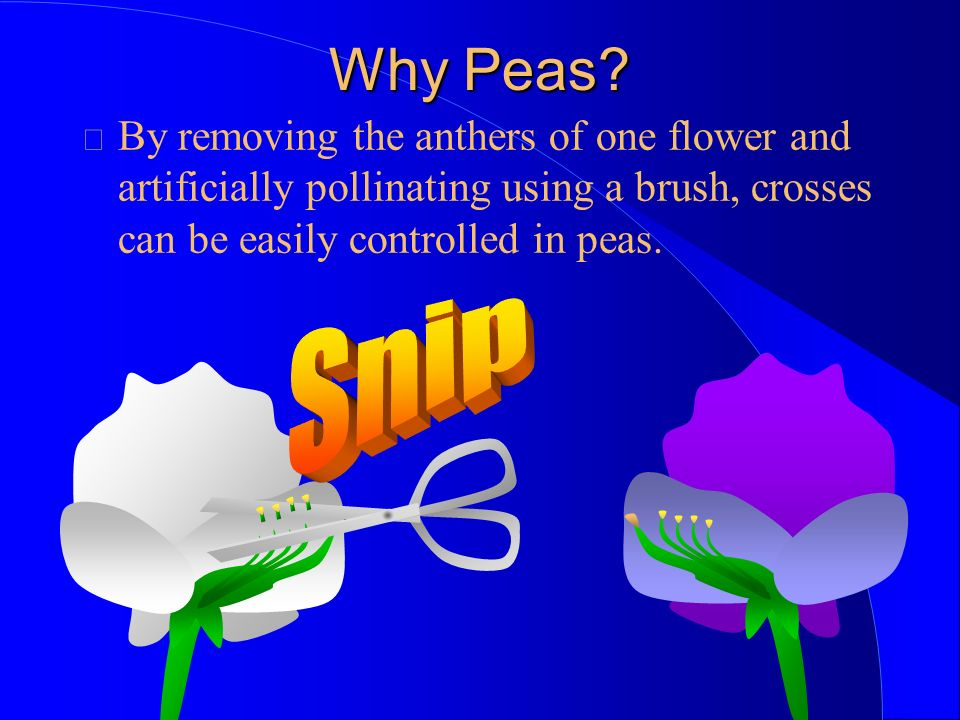 Why Peas.