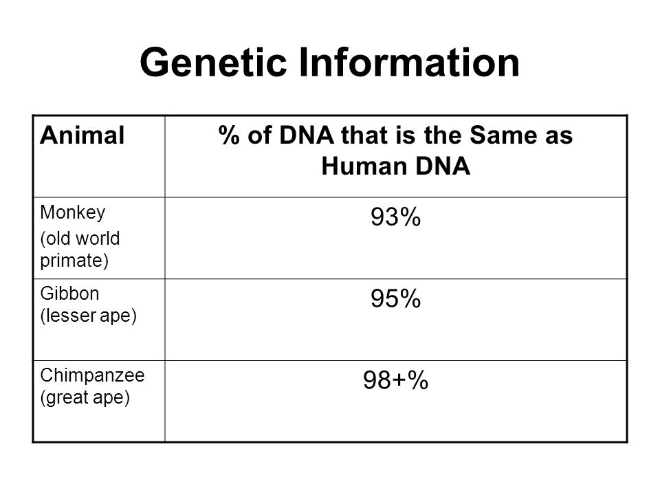 Genetic Information Animal% of DNA that is the Same as Human DNA Monkey (old world primate) 93% Gibbon (lesser ape) 95% Chimpanzee (great ape) 98+%