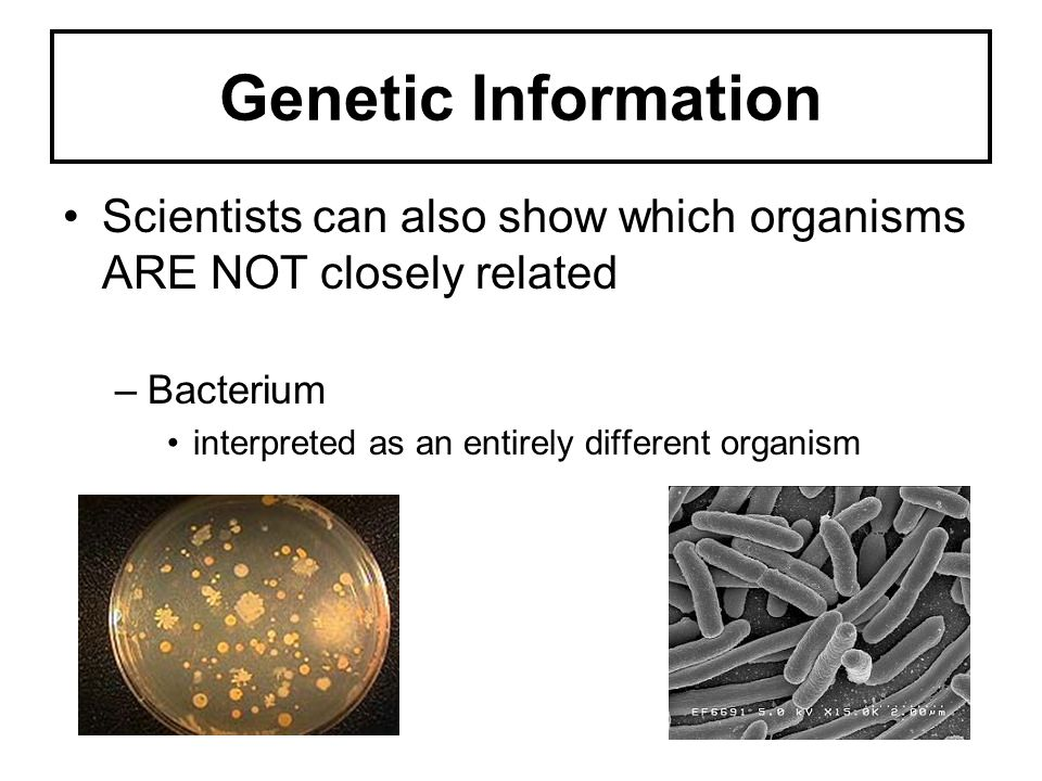 Genetic Information Scientists can also show which organisms ARE NOT closely related –Bacterium interpreted as an entirely different organism
