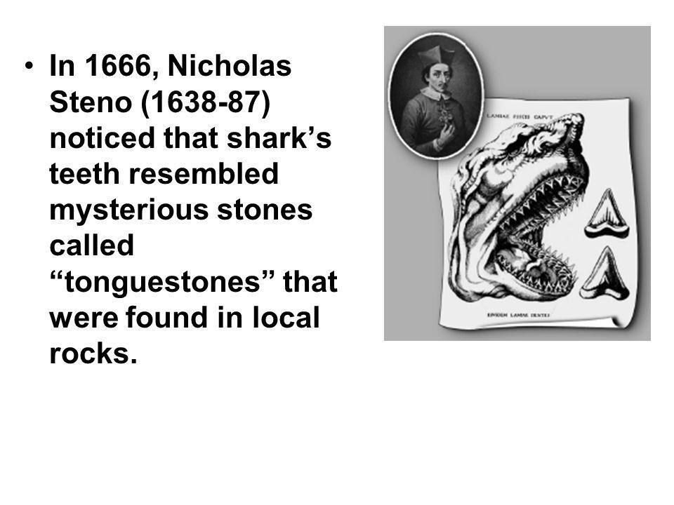 In 1666, Nicholas Steno (1638-87) noticed that sharks teeth resembled mysterious stones called tonguestones that were found in local rocks.