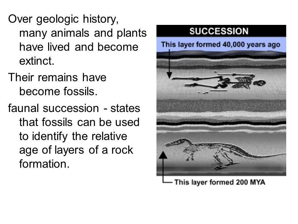 Over geologic history, many animals and plants have lived and become extinct. Their remains have become fossils. faunal succession - states that fossi