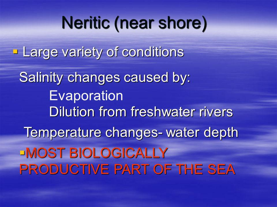 Neritic (near shore) Large variety of conditions Large variety of conditions Salinity changes caused by: Evaporation Dilution from freshwater rivers Temperature changes- water depth MOST BIOLOGICALLY PRODUCTIVE PART OF THE SEA MOST BIOLOGICALLY PRODUCTIVE PART OF THE SEA