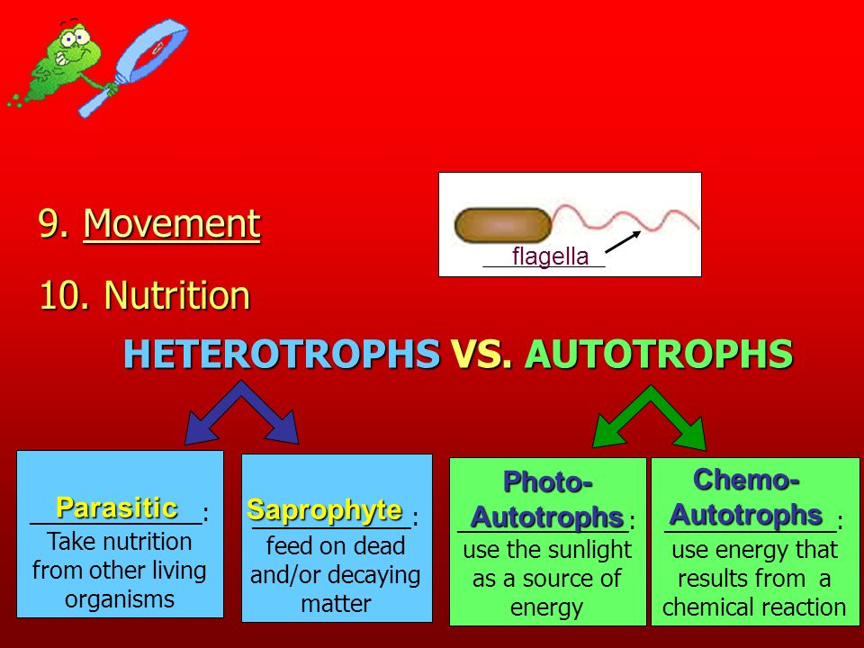 10. Nutrition 9. Movement Movement HETEROTROPHS VS. AUTOTROPHS _____________: Take nutrition from other living organisms ____________: feed on dead an