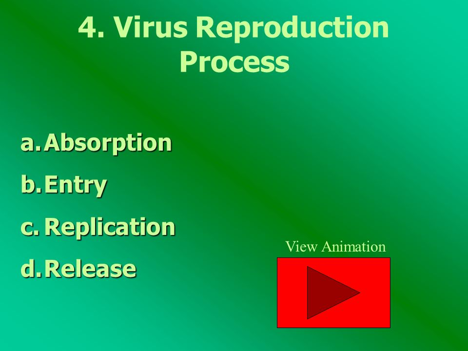 4. Virus Reproduction Process a.Absorption b.Entry c.Replication d.Release View Animation
