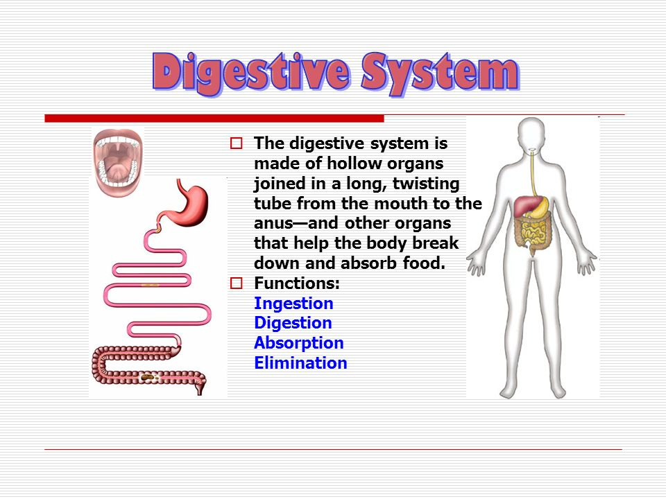 The first activity of the digestive system is to take in food through the mouth.