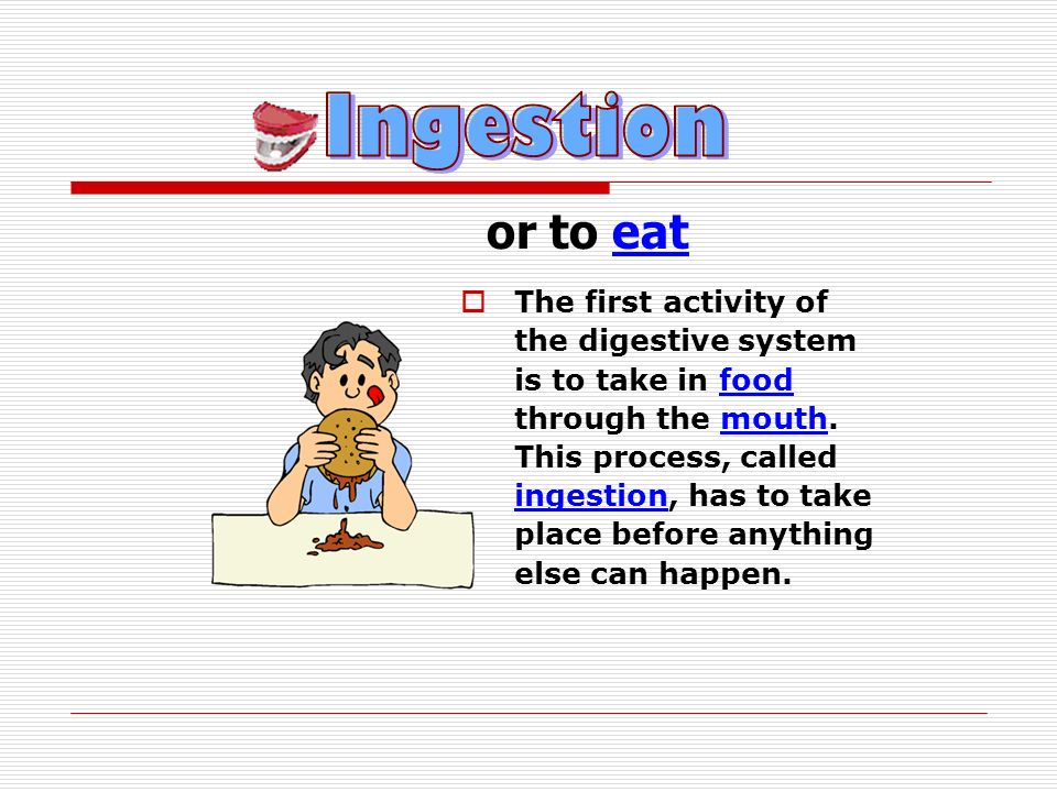 The solid parts of the food which have not been absorbed are stored in the rectum.