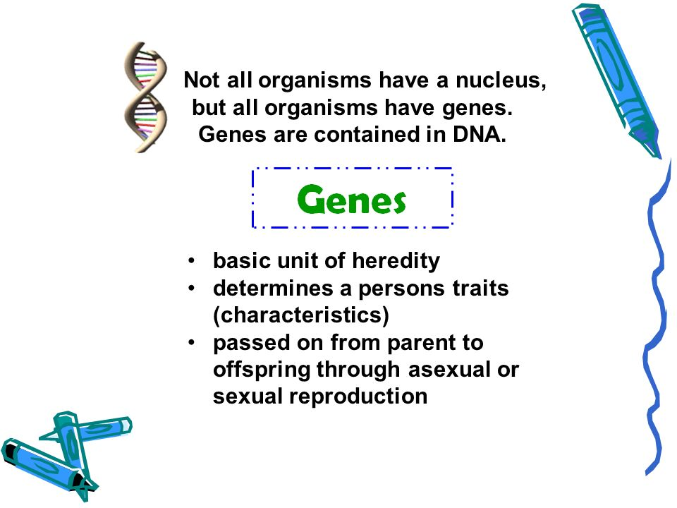Not all organisms have a nucleus, but all organisms have genes. Genes are contained in DNA. basic unit of heredity determines a persons traits (charac