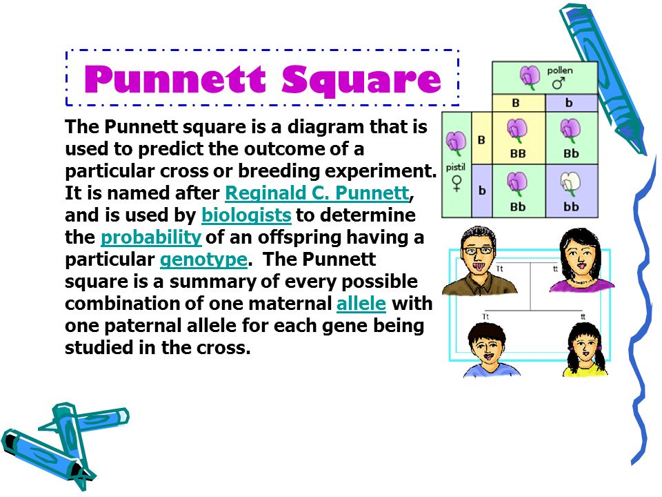 Punnett Square The Punnett square is a diagram that is used to predict the outcome of a particular cross or breeding experiment.