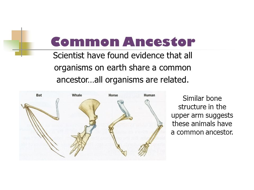 Scientist have found evidence that all organisms on earth share a common ancestor…all organisms are related. Similar bone structure in the upper arm s