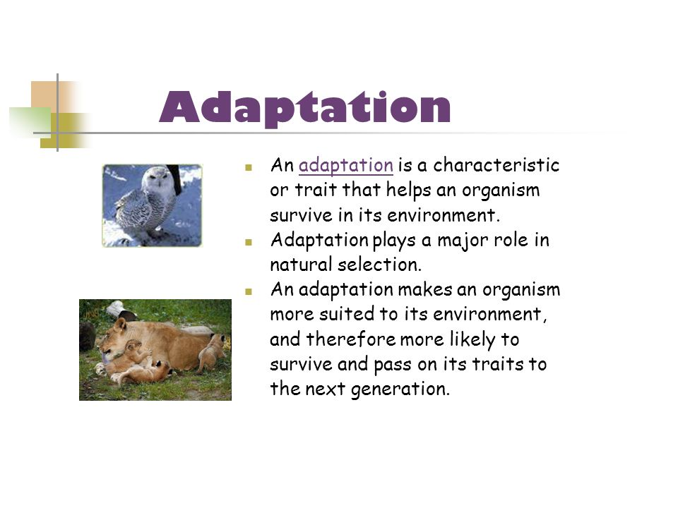 An adaptation is a characteristic or trait that helps an organism survive in its environment. Adaptation plays a major role in natural selection. An a