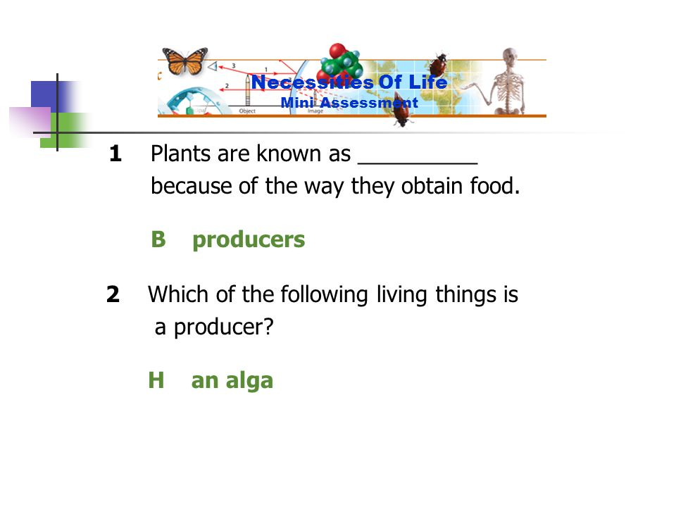 1Plants are known as __________ because of the way they obtain food. B producers 2Which of the following living things is a producer? H an alga Necess