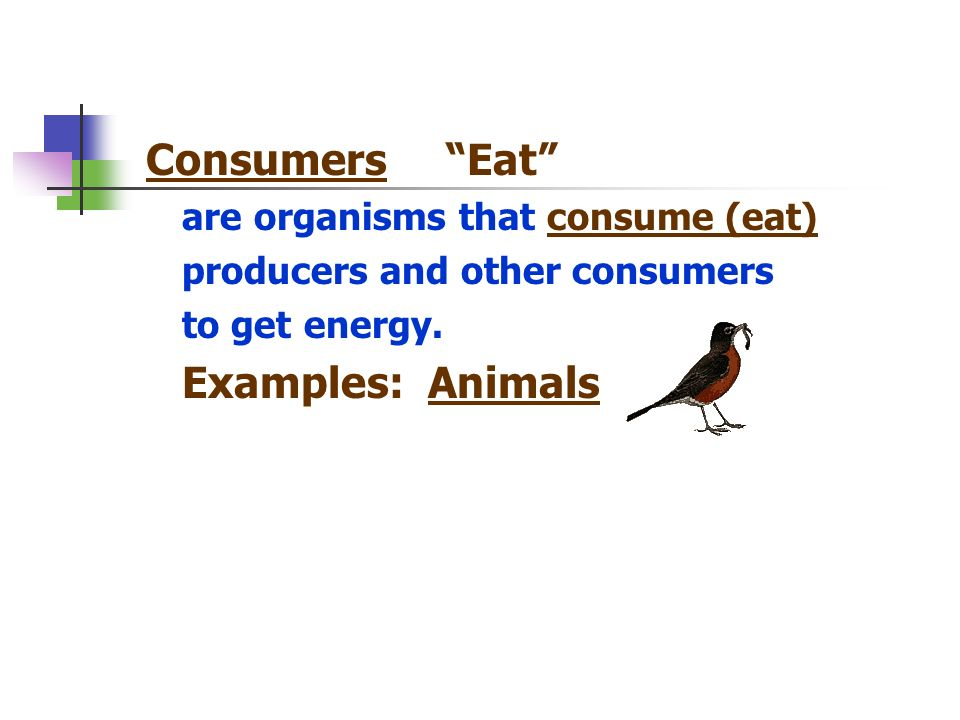 Consumers Eat are organisms that consume (eat) producers and other consumers to get energy. Examples: Animals