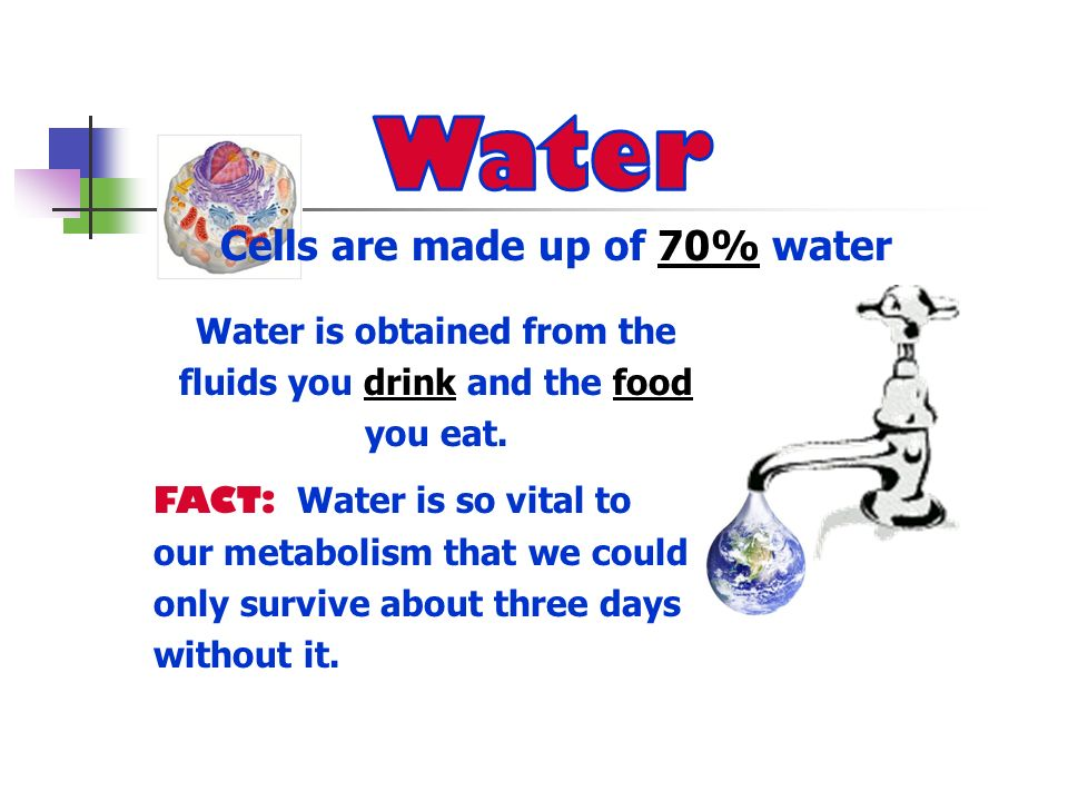 Cells are made up of 70% water Water is obtained from the fluids you drink and the food you eat. FACT: Water is so vital to our metabolism that we cou