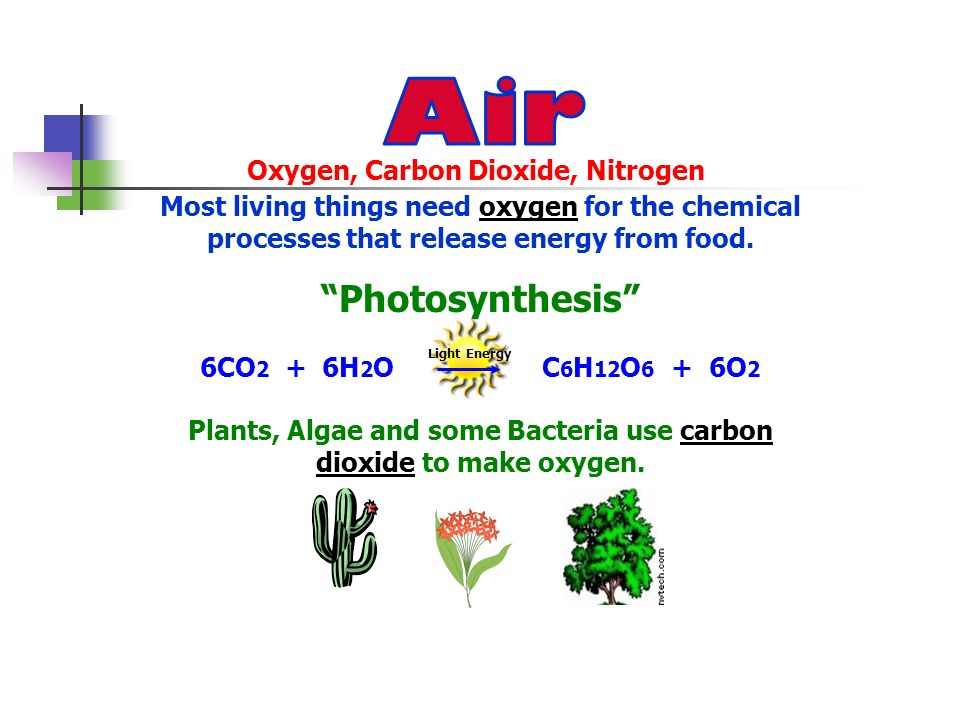 Oxygen, Carbon Dioxide, Nitrogen Most living things need oxygen for the chemical processes that release energy from food. Photosynthesis 6CO 2 + 6H 2