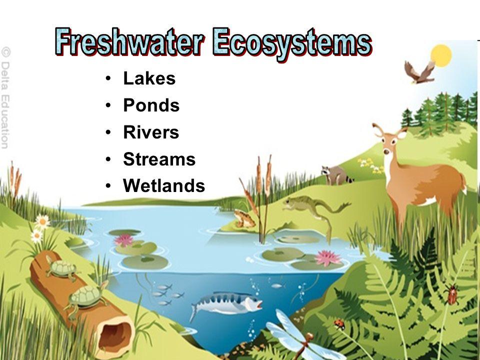 Lakes Ponds Rivers Streams Wetlands