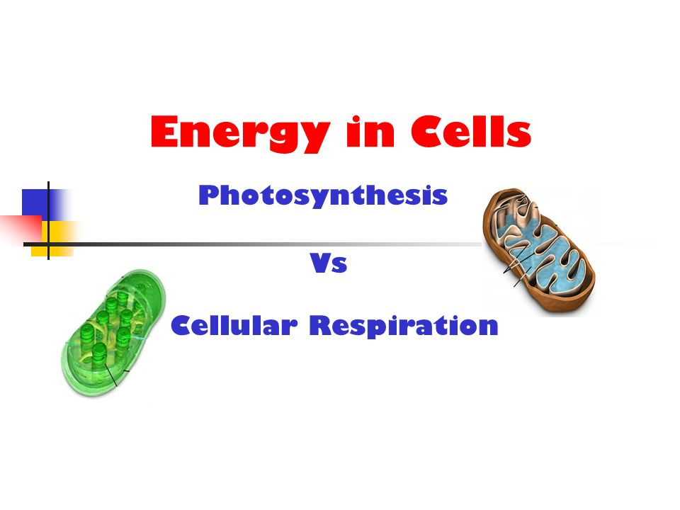 Energy in Cells Cellular Respiration Photosynthesis Vs
