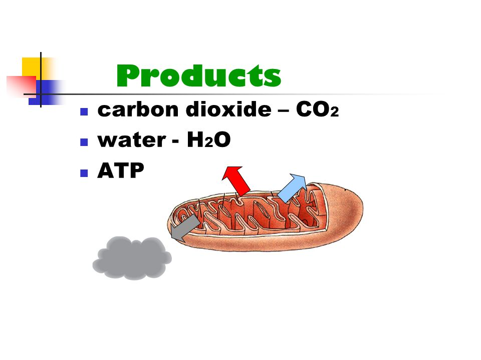 Products carbon dioxide – CO 2 water - H 2 O ATP
