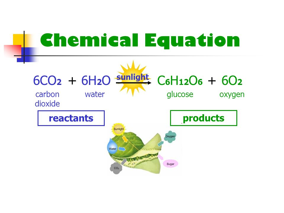 Chemical Equation 6CO 2 6H 2 O + sunlight C 6 H 12 O 6 6O 2 + carbon dioxide waterglucoseoxygen reactants products