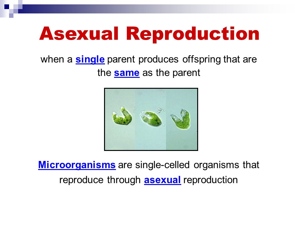 Organisms make other organisms like themselves through the process of reproduction.