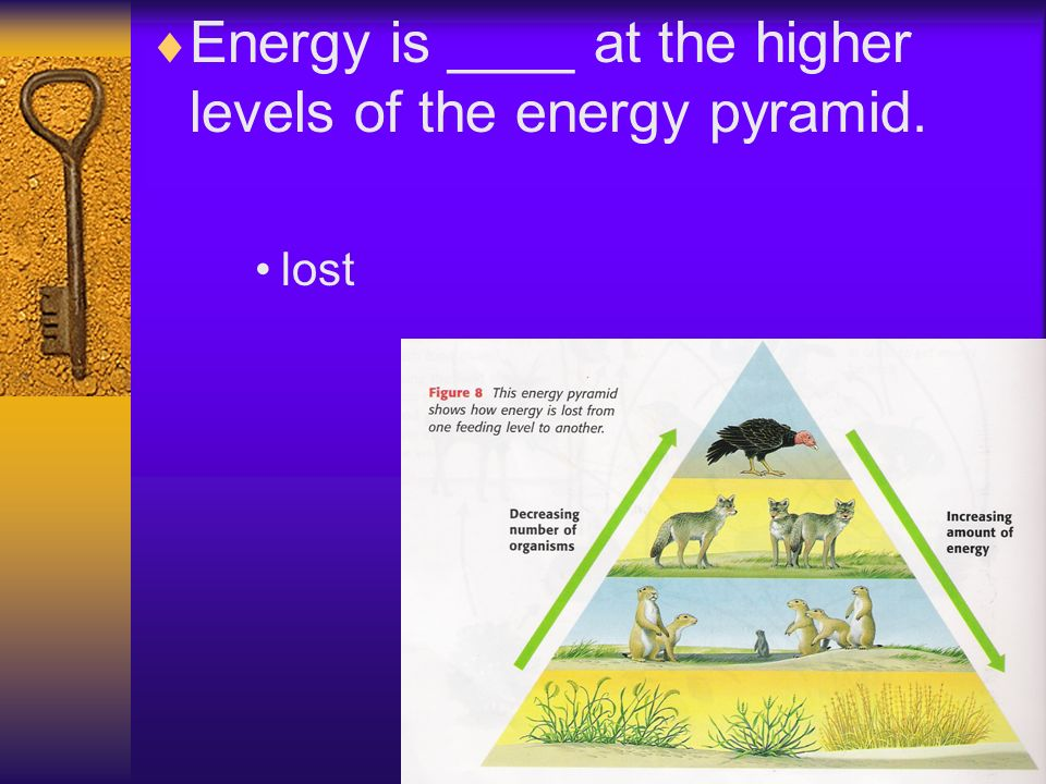 Energy is ____ at the higher levels of the energy pyramid. lost