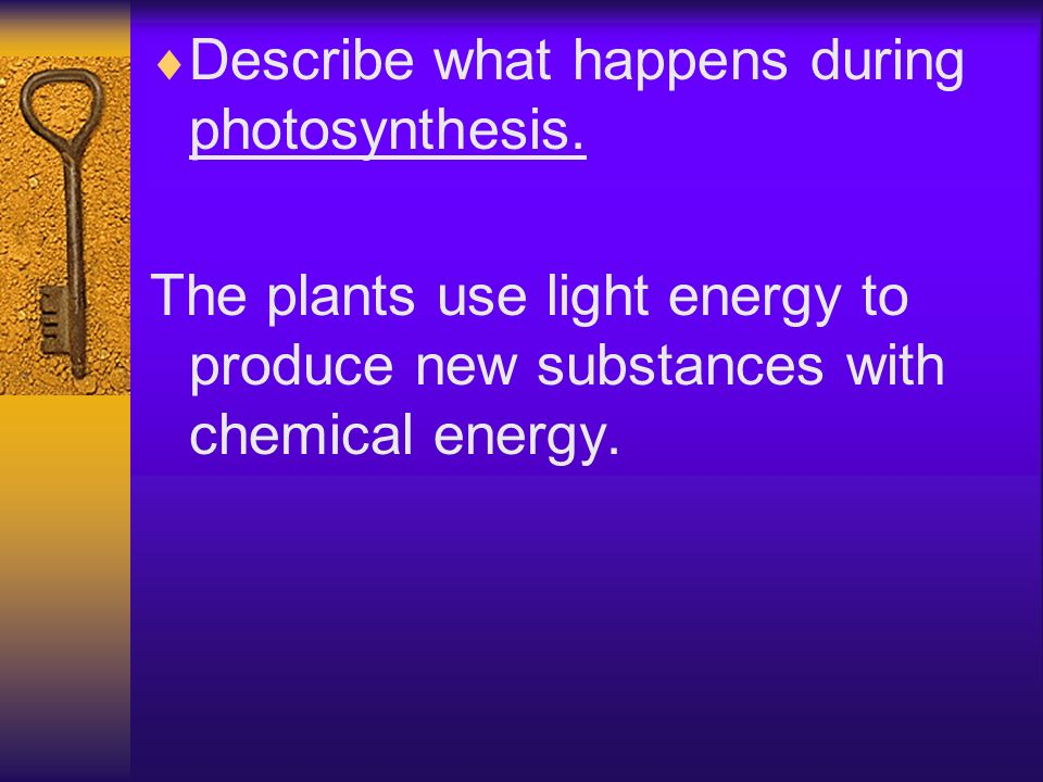 Describe what happens during photosynthesis. The plants use light energy to produce new substances with chemical energy.