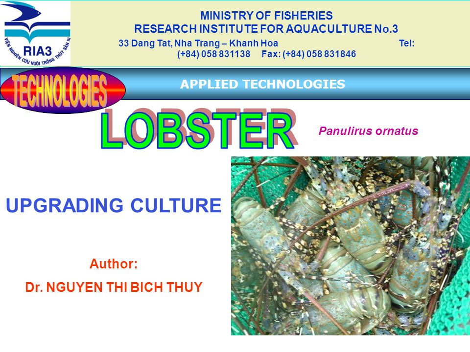 UPGRADING CULTURE Author: Dr. NGUYEN THI BICH THUY MINISTRY OF FISHERIES RESEARCH INSTITUTE FOR AQUACULTURE No.3 33 Dang Tat, Nha Trang – Khanh Hoa Te