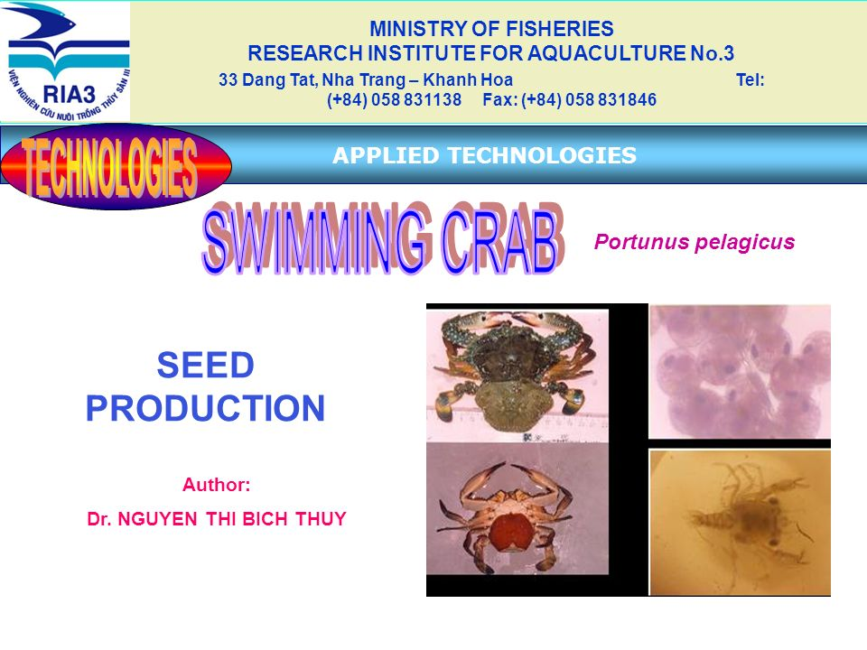 SEED PRODUCTION Author: Dr. NGUYEN THI BICH THUY MINISTRY OF FISHERIES RESEARCH INSTITUTE FOR AQUACULTURE No.3 33 Dang Tat, Nha Trang – Khanh Hoa Tel: